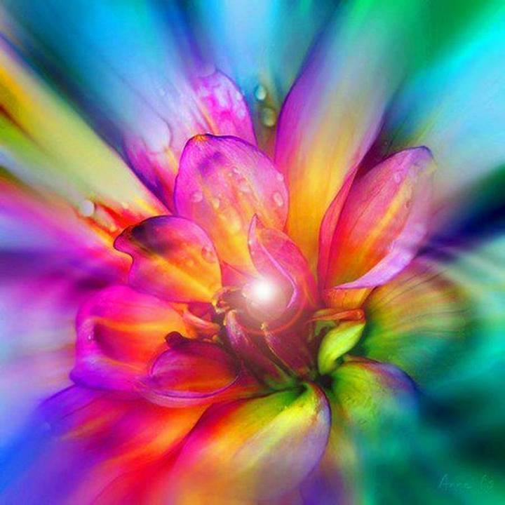 цветок сердца